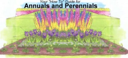 How-To Guide for Planting and Caring for Annuals and Perennials