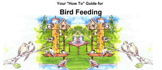 How-To Guide to Bird Feeding