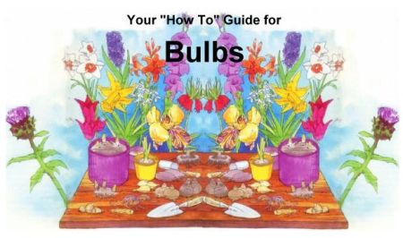 How-To Guide for Planting Bulbs