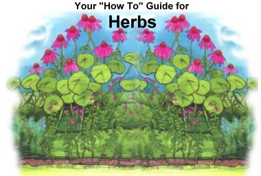 How-To Guide for Planting and Caring for Herbs