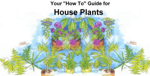 How-To Guide for Buying and Caring for House Plants