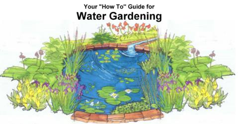 How-To Guide for Water Gardening
